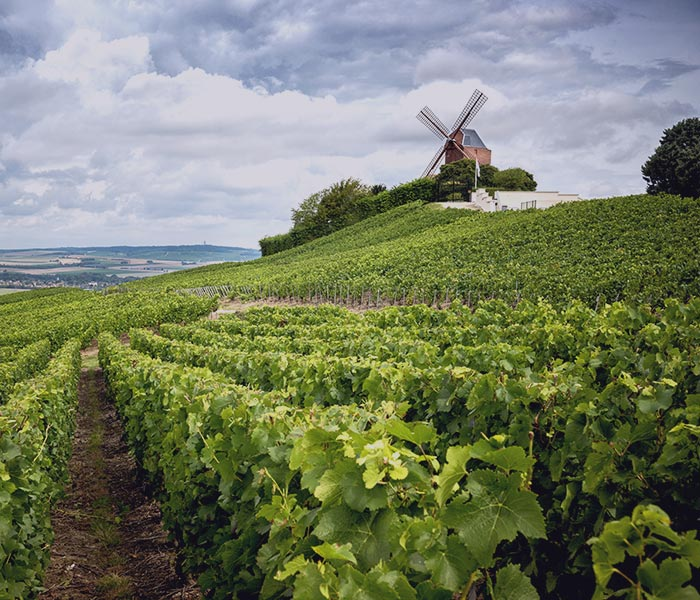 luxo champagne vineyards france